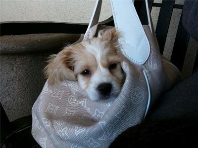s-jj in the bag.jpg